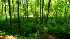 Turcja bieg stanu parka las zbiory wideo
