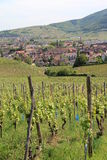 Turckheim in the vineyard of Alsace Royalty Free Stock Image