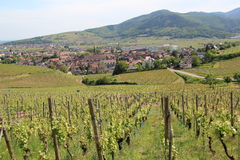 Turckheim in the vineyard of Alsace Stock Photo