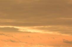 Turco Van Cat che gode del tramonto Fotografie Stock