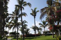 Turcos y Caicos de las palmeras Foto de archivo libre de regalías
