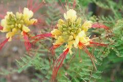 Tureccy egzotów kwiaty Obrazy Stock