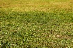 turf fotografia de stock