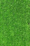 Turf Royalty Free Stock Images