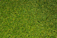Turf. Artificial grass texture, A turf  background Stock Photos