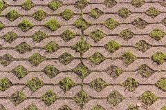 Turf concrete block pavers covered with growing green grass. Turf concrete block paves covered with growing green grass. I can be used as walk way in garden or royalty free stock images