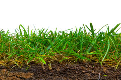Turf cross section Stock Images