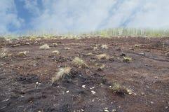 The turf field. Stock Photos