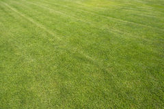 The turf on the football field Royalty Free Stock Photography