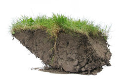 Turf with Grass Royalty Free Stock Photography