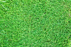 Turf Grass Background Stock Photography