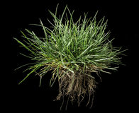 Turf grass and earth Stock Photos