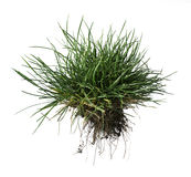 Turf grass and earth Royalty Free Stock Images