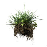 Turf grass and earth Stock Photo