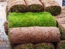 Turf grass roll Stock Image