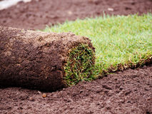 Turf grass roll Royalty Free Stock Photo