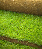 Turf grass roll closeup royalty free stock images