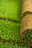 Turf grass rolls. In a row partially unrolled - shallow depth of field royalty free stock photo