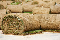 Turf grass rolls Royalty Free Stock Photography
