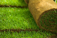Turf grass rolls closeup. Green turf grass roll and background - closeup, shallow depth of field stock photos