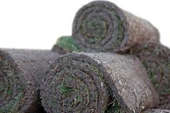 Turf grass rolls Stock Image