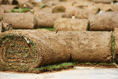 Turf grass rolls Royalty Free Stock Images