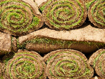 Turf grass rolls Royalty Free Stock Image