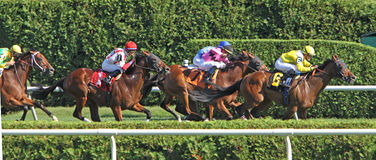 Turf Race Stock Photo