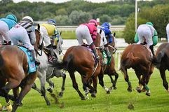 Turf Racing at Parx `A View from Behind` royalty free stock image