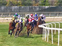 The Alphabet Soup Stakes. Turf racing from the top of the stretch. Head on view of a large field of racehorses turning into the stretch on the turf at Parx for royalty free stock photos