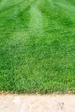 Turf for rolls Stock Photography