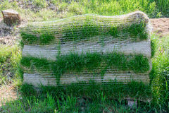 Turf for rolls Royalty Free Stock Image