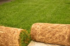 Turf sod. Fescue turf sod rolled up ready to be transported stock photos