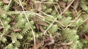 Turf in the spring forest stock footage