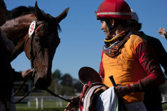 Turf winners. Turf winner, ganadores del gran premio. Mirada complice. Caballo y jinete. Jockey and horse Stock Images
