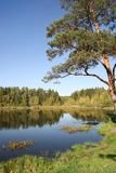 Turfmeer in het de herfstbos Stock Afbeeldingen