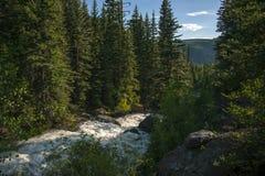 Turgid Mountain Stream, Telluride, Colorado. A raging mountain stream churns through Keystone Gorge outside Telluride, Colorado Royalty Free Stock Image