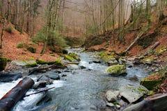 Turichka river in the forest. Near Lumshory village of TransCarpathia, Ukraine. beautiful autumnal scenery royalty free stock photos