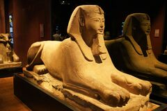 TURIN, ITALY - AUGUST 19, 2021: Egyptian sphinx statue at the Egyptian Museum of Turin, Italy
