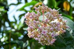 Turism för Singapore blommakupol Arkivfoto