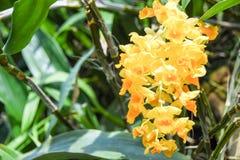 Turism för Singapore blommakupol Royaltyfria Foton