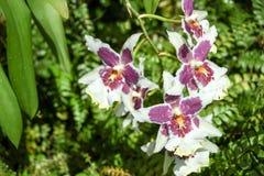 Turism för Singapore blommakupol Royaltyfri Fotografi
