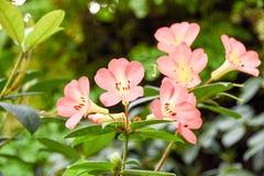 Turism för Singapore blommakupol Royaltyfri Bild