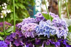 Turism för Singapore blommakupol Fotografering för Bildbyråer