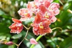 Turism för Singapore blommakupol Arkivfoton