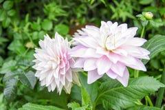 Turism för Singapore blommakupol Royaltyfria Bilder
