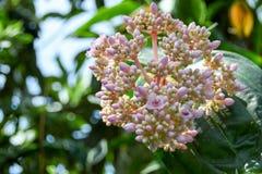 Turism för Singapore blommakupol Royaltyfri Foto