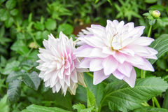 Turism för Singapore blommakupol Arkivbilder