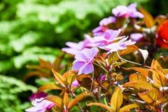 Turism för Singapore blommakupol Arkivbild