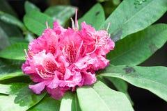 Turismo da abóbada da flor de Singapura Imagens de Stock